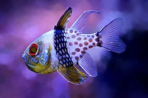 水下, 水生動物, 游泳 的 免费素材图片