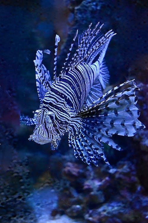 有毒, 水下, 水生動物 的 免费素材图片