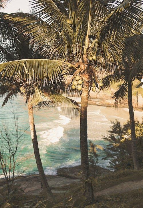 假期, 公路旅行, 土地, 地球 的 免費圖庫相片