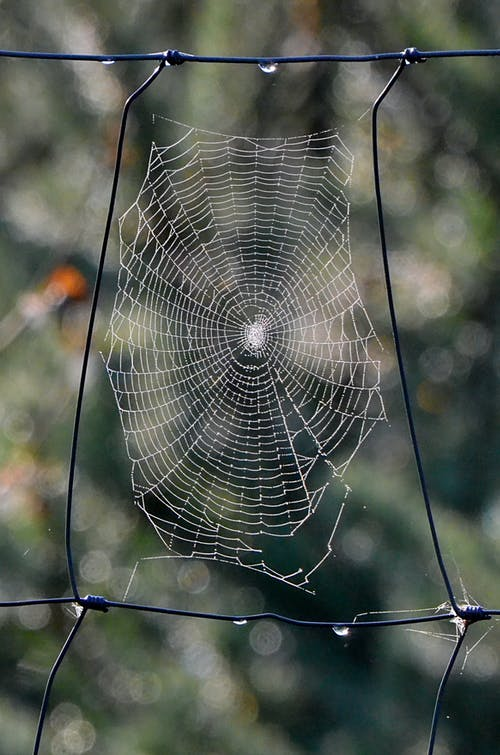 Close-Up Photo Of Spider's Web