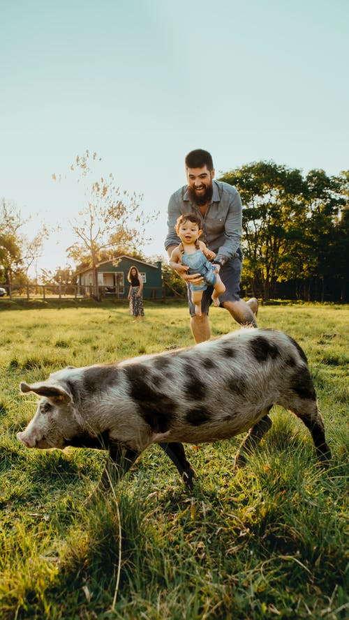 Father And Child Playing With A Pig