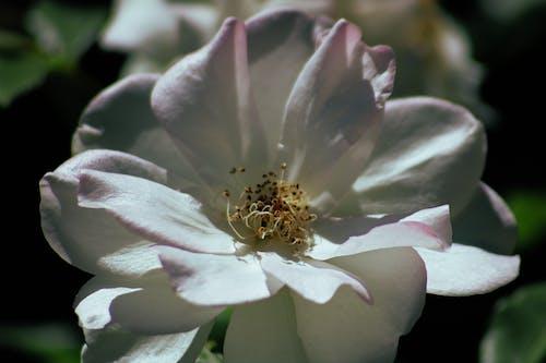 White Flower in Macro Shot