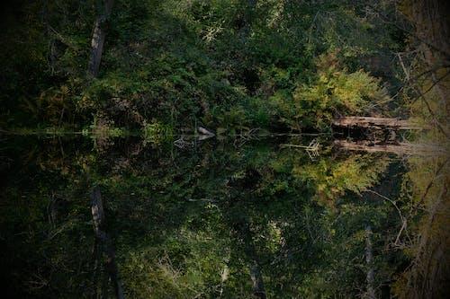 Fotos de stock gratuitas de arboles, calma, estanque, reflejos de luz