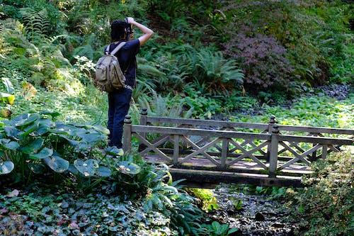 Fotos de stock gratuitas de fotógrafo, parque, puente, verde