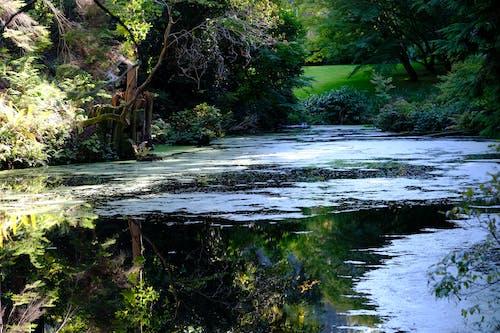 Fotos de stock gratuitas de agua, calma, parque, reflejos