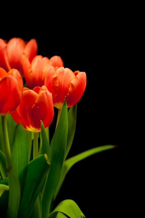 Безкоштовне стокове фото на тему «завод, заводи, квіти, квітка»
