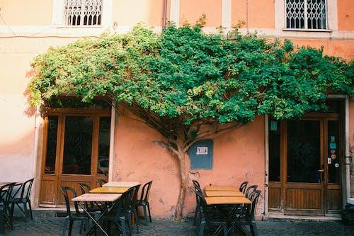Green Tree On A Restaurant Patio