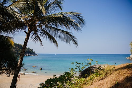 Green Palm Tree Near Blue Sea Under Blue Sky
