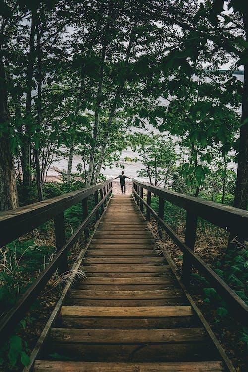 Základová fotografie zdarma na téma cesta, chůze, dřevo, krajina