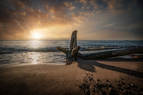 Brown Wooden Tree Trunk on Beach during Sunset