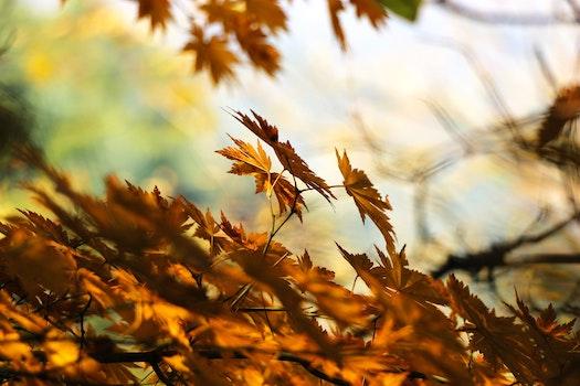 Brown Dry Leaves