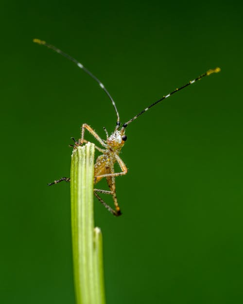 Tiny insect with long antennae