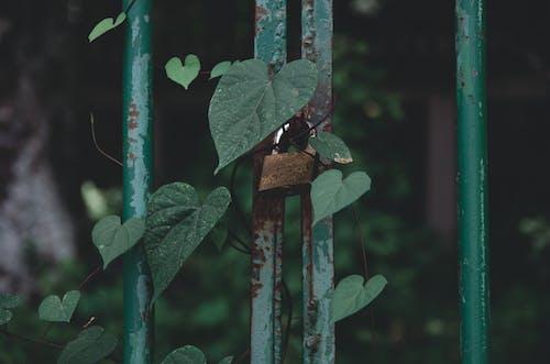 Free stock photo of cadeado, coração, door