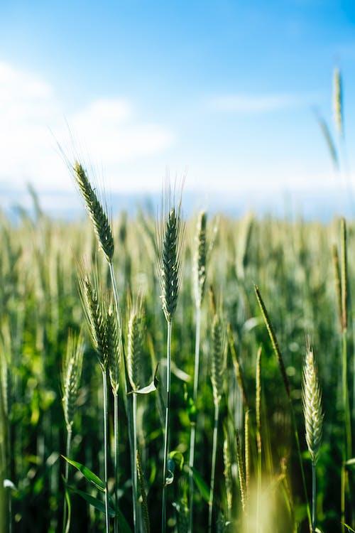 Gratis stockfoto met akkerland, bio, boerderij, bouwland