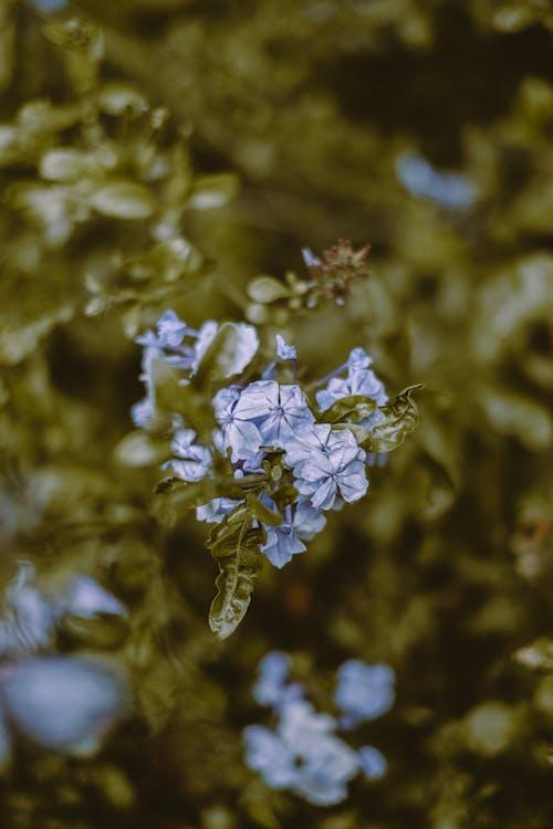 Fotos de stock gratuitas de aroma, aromático, botánica