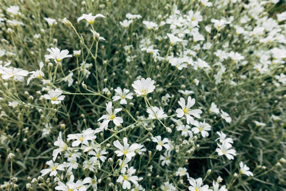 Gratis stockfoto met achtergrond, blad, bloeien