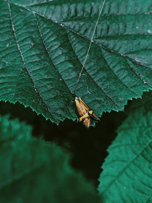 Tiny butterfly with long antennae on  leaf