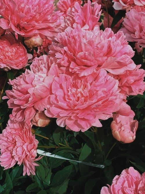Základová fotografie zdarma na téma aroma, aromatický, báječný, botanický