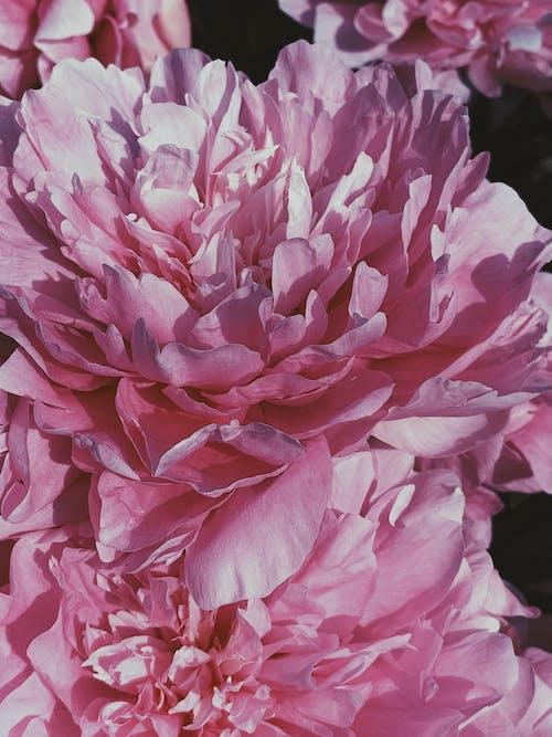 Základová fotografie zdarma na téma aroma, aromatický, báječný, barevný