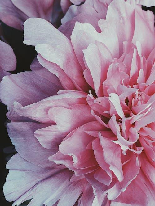 Základová fotografie zdarma na téma aroma, barevný, blažený, botanický