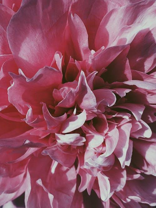 Základová fotografie zdarma na téma aroma, barevný, botanický, bujný