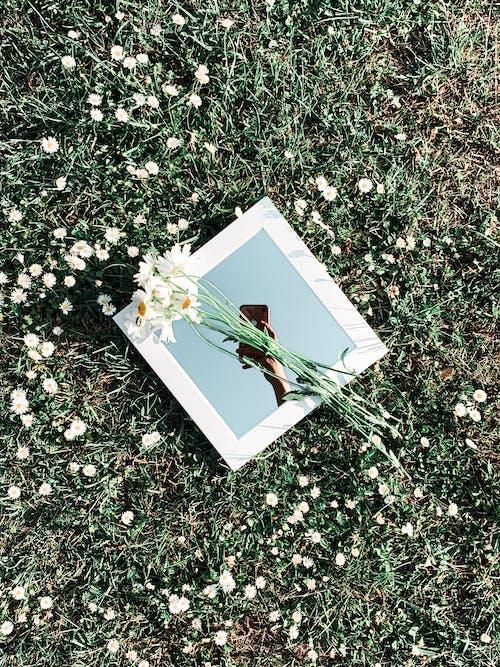Základová fotografie zdarma na téma barva, dekorace, design, flóra