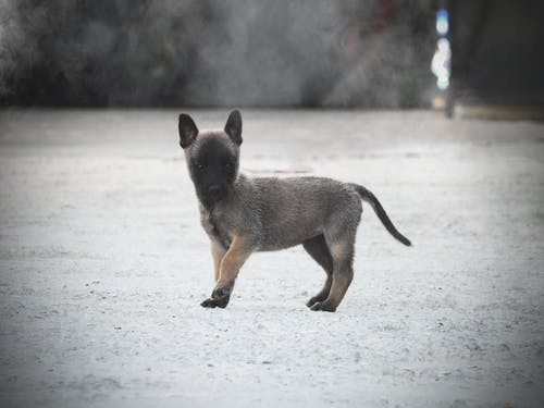 Free stock photo of animal, animal photography, baby dog, dog photography