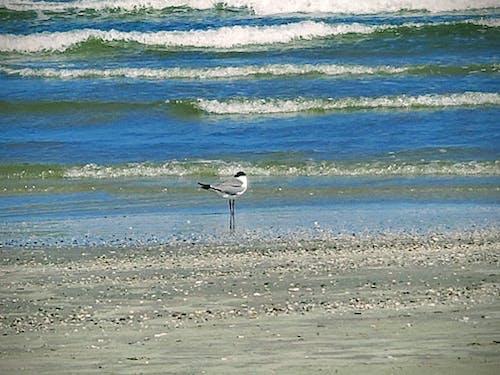 Free stock photo of beach, gulf, ocean water