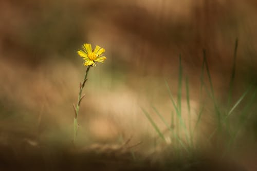 Free stock photo of bokeh, brown, brown and green, flower
