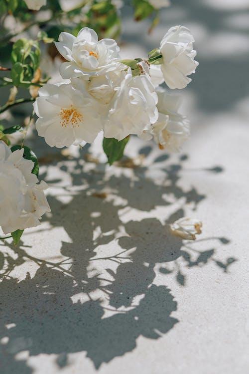 Imagine de stoc gratuită din floare, floră, flori