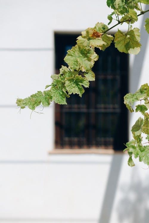 Ingyenes stockfotó gyár, levelek, makró témában