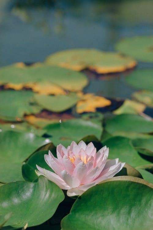 Foto d'estoc gratuïta de estany, fulles, llac