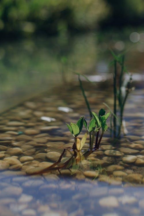 垂直, 水生植物, 池の無料の写真素材