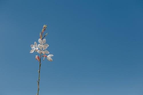 คลังภาพถ่ายฟรี ของ ดอกไม้, ต้นไม้, ท้องฟ้าสีคราม