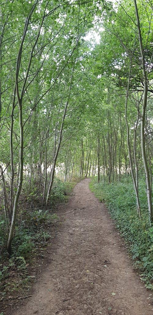 Ảnh lưu trữ miễn phí về đường đến hư không, đường mòn, đường quê, hầm cây