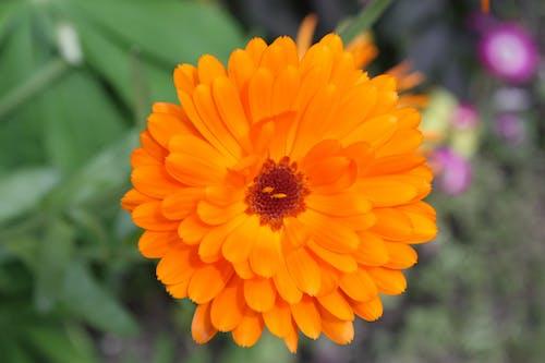 Foto stok gratis bunga, Perancis, taman, versailles