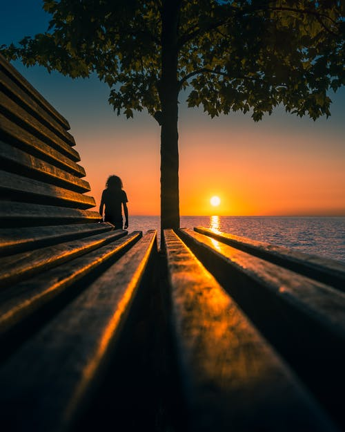 Wooden bench placed near tall tree against rippling water with sun shining on horizon at sundown time on embankment in evening
