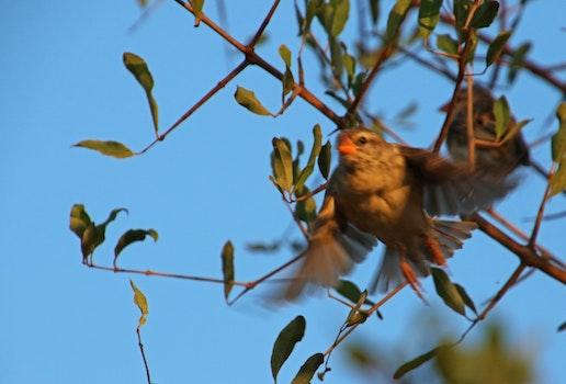 Free stock photo of flight, nature, bird, flying
