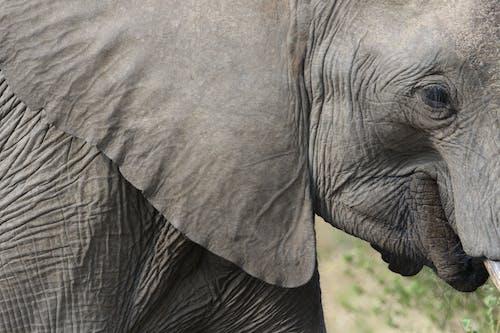 Foto profissional grátis de África, amplo, animais selvagens, animal