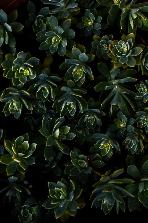 Green Succulent Plants