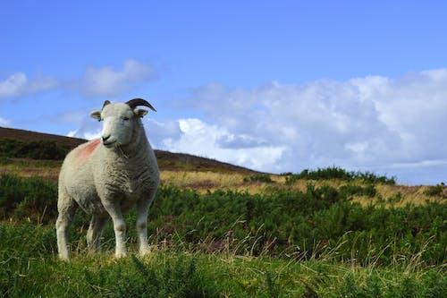 Základová fotografie zdarma na téma Anglie, farma, hřiště, léto