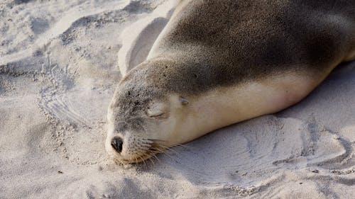 Fotobanka sbezplatnými fotkami na tému chlpatý, cicavec, divočina, fotografie zvierat žijúcich vo voľnej prírode