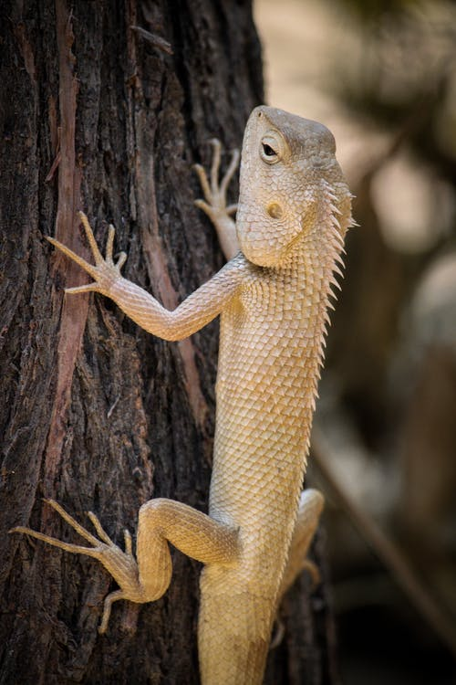 Close-Up Photo of Iguana on Brown Tree Trunk