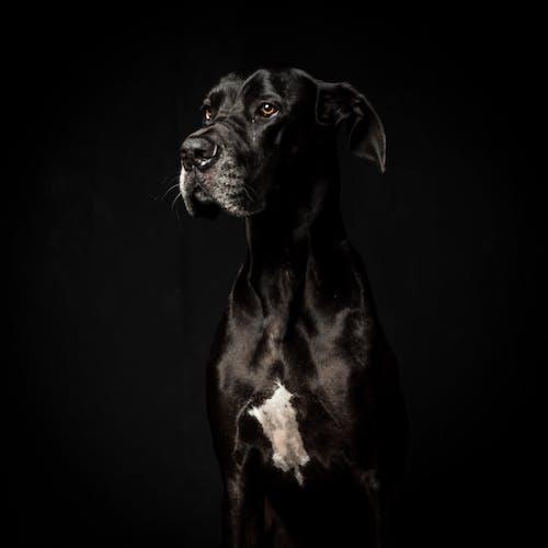 Black Short Coated Dog