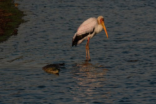 Kostnadsfri bild av fågel, natur, sjöfågel, vilda livet