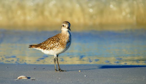 White and Brown Bird on Sand