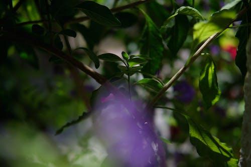 Free stock photo of dark green leaves