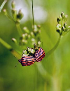 Macro Photo of Red and Orange Bug