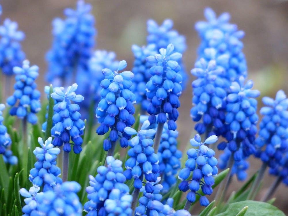 Blue Petaled Flower With Green Leaf