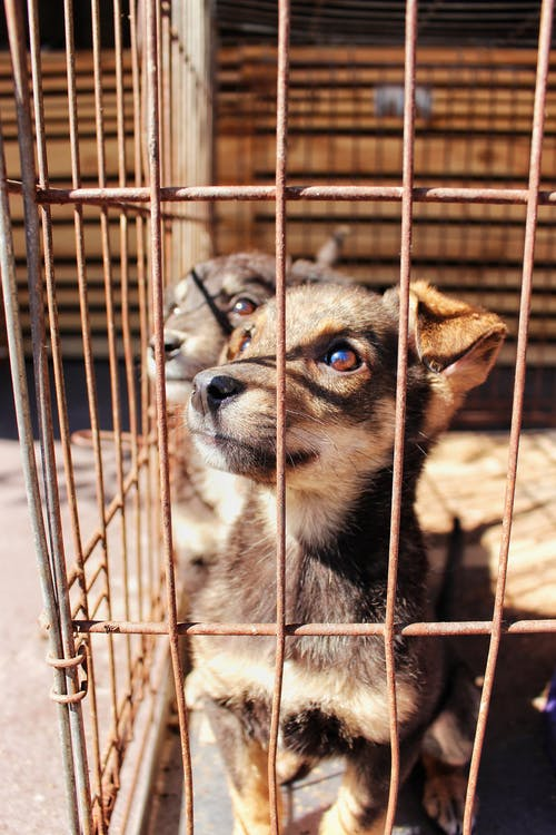 Brown and Black Short Coated Dog in Cage